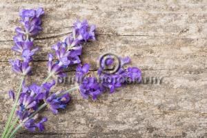 lavender-wood-background2-c