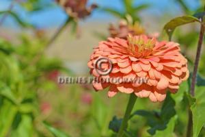 orange-flower-c2