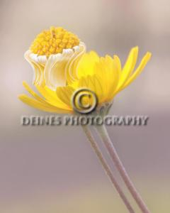 yellow-flower-c